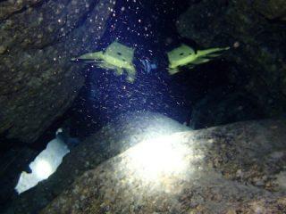 久米島海底洞穴 with SF2 sidemount CCR